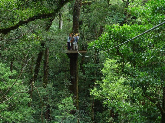 zipline. Before taking on this canopy tour take note that you will need to be in good physical condition. You will also be provided with safety gear and ... & Witches Rock Canopy Tour - Costa Rica - CruiseGourmet Magazine