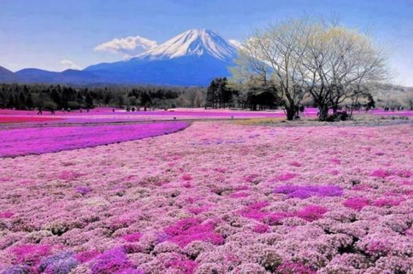 Hokkaido-Spring-Flowers