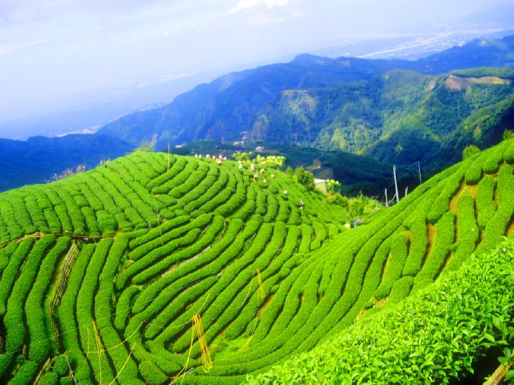 South Korean Natural Beauty