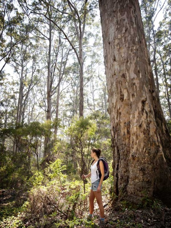 bush-walking-boranup-forest