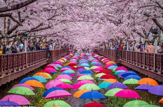 Jinhae Gunhangje festival - South Korea
