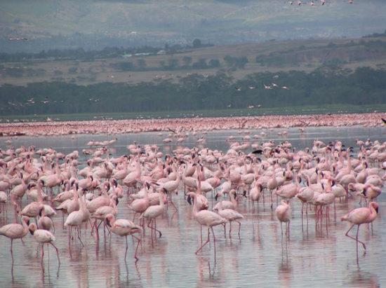 Lake Naivasha - Kenya