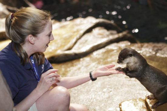 Trainer with Asian Small Clawed Otter