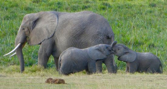 Amboseli National Reserve Nigeria
